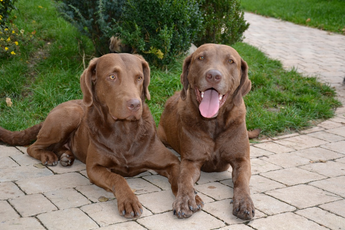 Unsere grossen Hunde